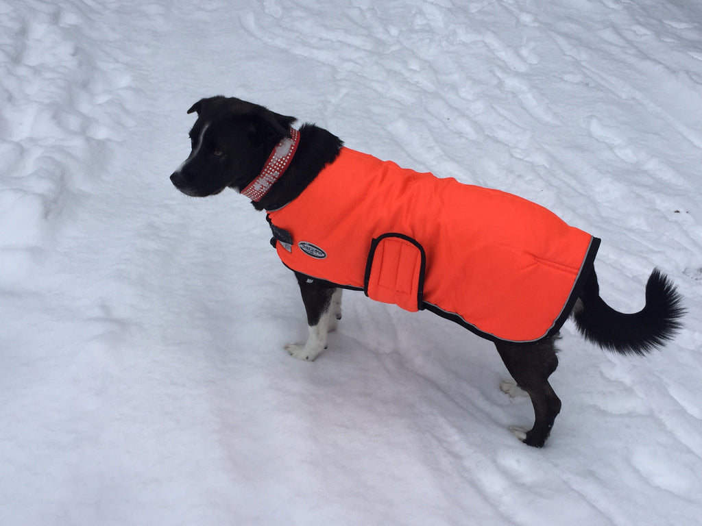 Shedrow Orange tundra dog coat