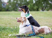 Training dogs in training collar attachment