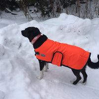 Shedrow K9 Tundra Dog Coat Orange SALE