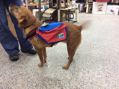 Sierra dog backpack