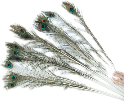 Peacock Feather for cats