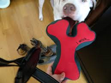 Planet Dog - Squeaky Wishbone SALE