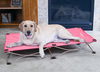 Carlson Pet Products - The Portable Pup - Dogs up to 95lbs
