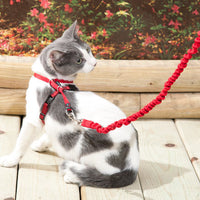 Premier Cat Harness with Leash 4