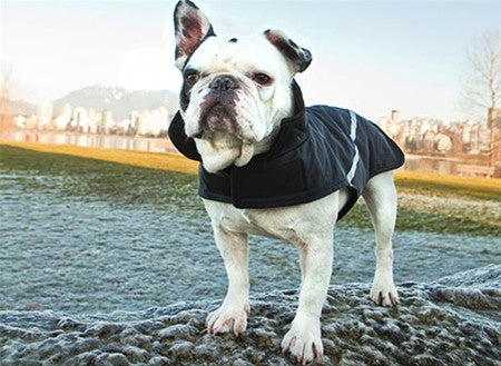 RC Pets - Whistler Zip Line Coat - Black and Red  - SALE CLEARANCE ON COATS!
