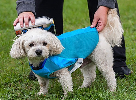 canine equipment ultimate cooling coat