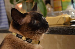 Rogz Cat Collars - Glamcat - small
