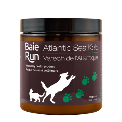 baie run atlantic sea kelp
