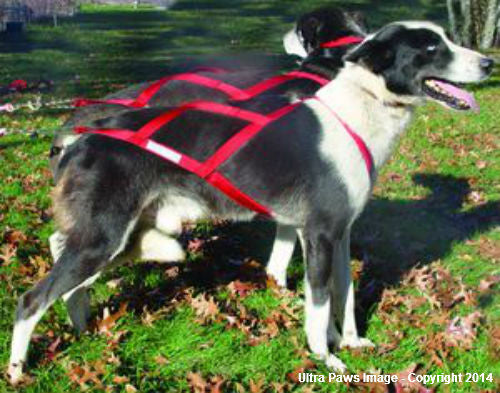 Ultra Paws Skijouring Harness