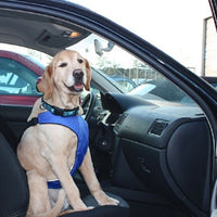 Canine Friendly - Vest Harness