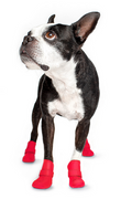 Wellies Dog Boots - Red