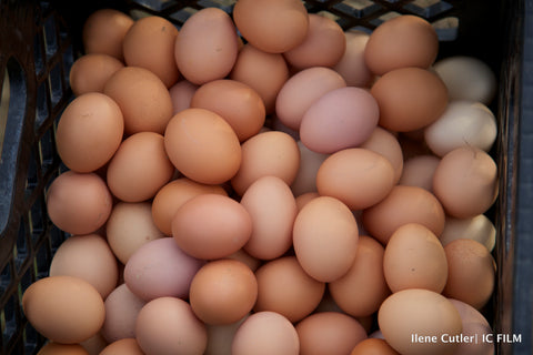 CSA: Egg Share (23 weeks)