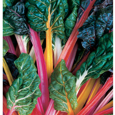 Vegetable, Chard, Bright Lights