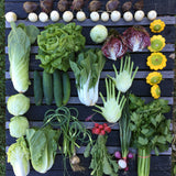 CSA: Half Share, Full Season (23 weeks)