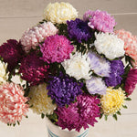 Flower, Aster, Towers Custom Mix