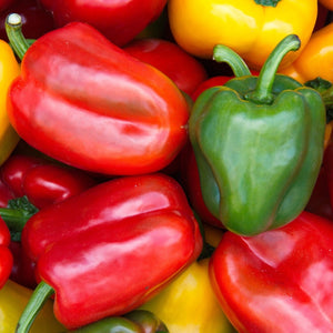 Bell Pepper all colours