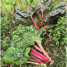Load image into Gallery viewer, Rainbow Chard