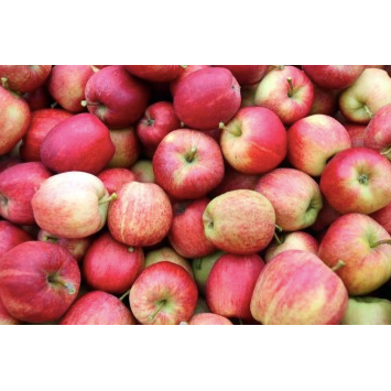 Windsor Apples