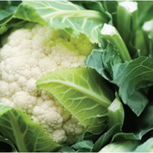 Load image into Gallery viewer, Kent Cauliflower