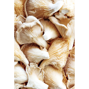 Kent Oyster Mushrooms