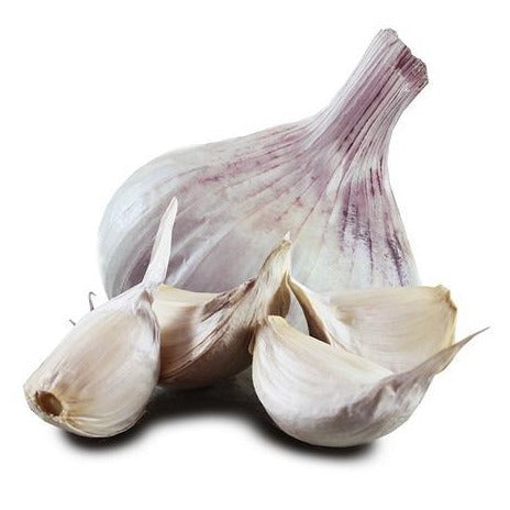 Large Iberian Wight Garlic Bulb