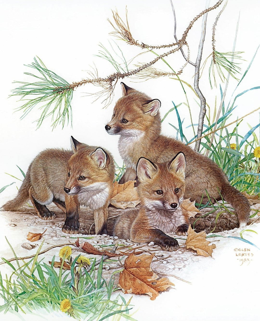 Glen Loates wildlife art fox painting
