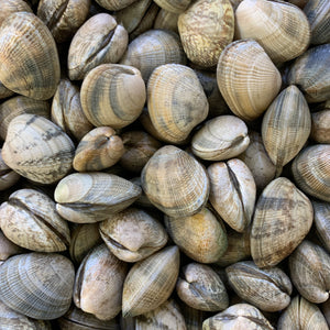 + Optional extra: Clams - 500g