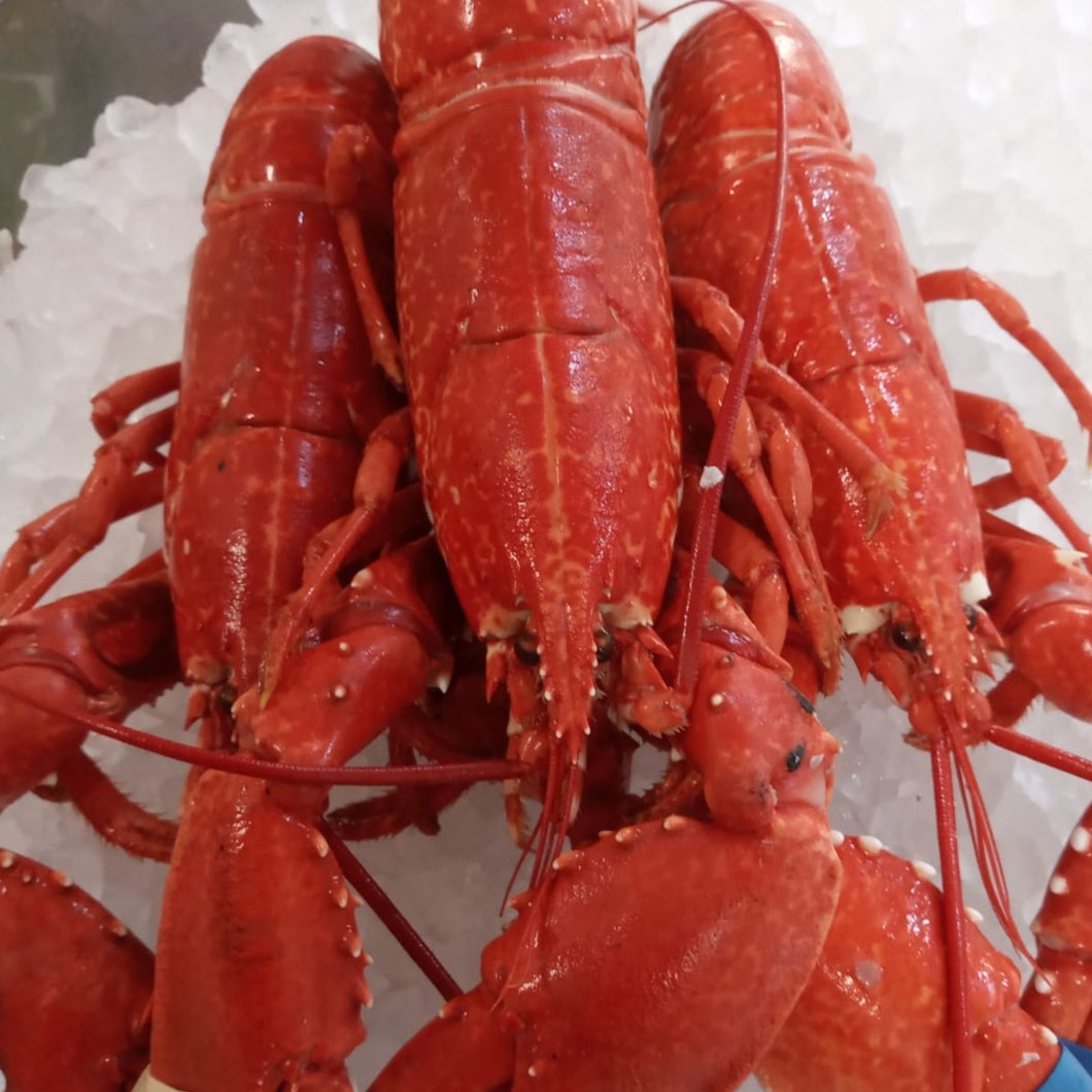 1 x + Optional extra: South Coast Lobster (500g-550g)