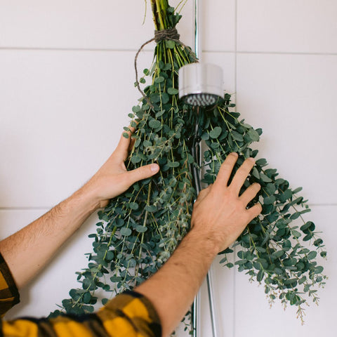 Person hanging a bundle of eucalyptus in their shower