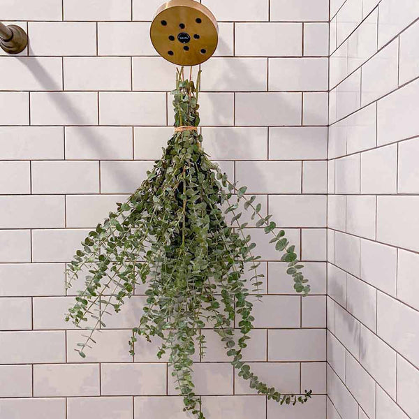 Eucalyptus bundle hanging from shower head in white tile shower from twine with brass shower head
