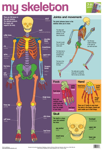 My Skeleton Wallchart-9781859972687