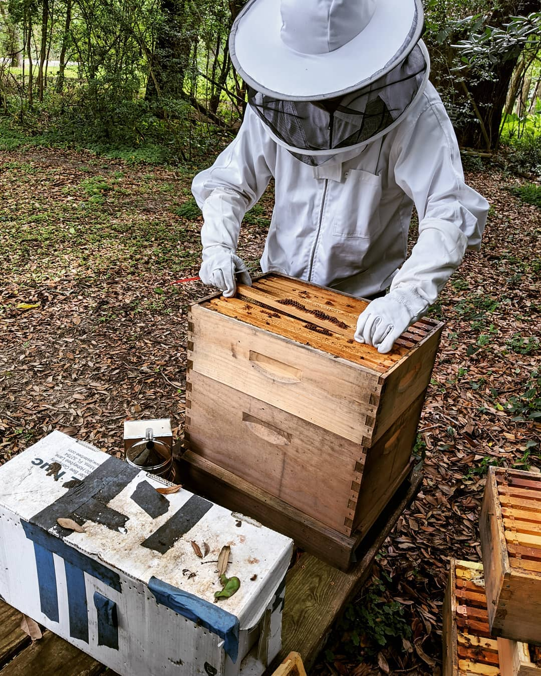 Beekeeping checking beehives