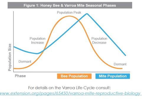 Honey Bee & Varroa Mite Seasonal Phases via Extension.org