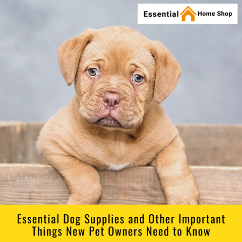 Essential Dog Supplies and Other Important Things