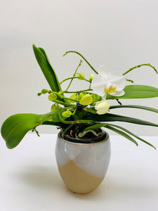 Orchidee - wit - spiraalvorm  - met of zonder deco pot D&M