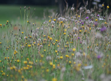 Wildflowers on the Golf Course
