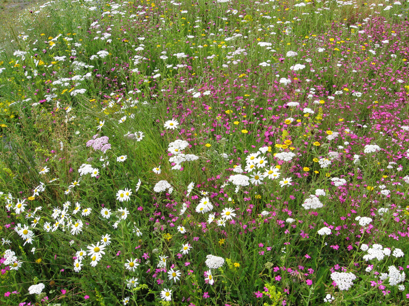 Benefits of Wildflower Turf