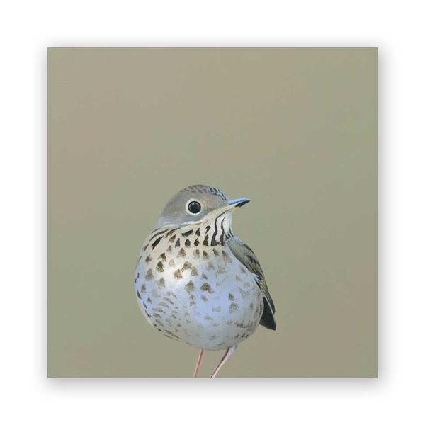 Thrush - Wings on Wood Collection