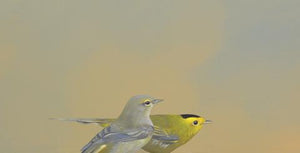 Wilson's Warblers - Wings on Wood Collection