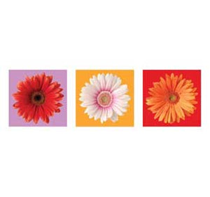 Daisies, Red, White & Orange Wall Art