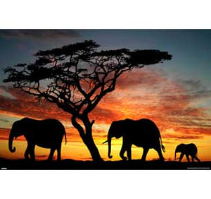 Elephants - African Sunset 24In X 36In Poster