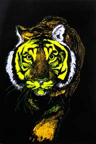 Tiger Black Light 24In X 36In Poster