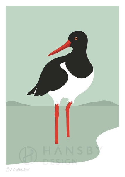 The Fantail House, NZ Made,  Cathy Hansby, Contemporary Art Prints, Seabirds, Oyster Catcher