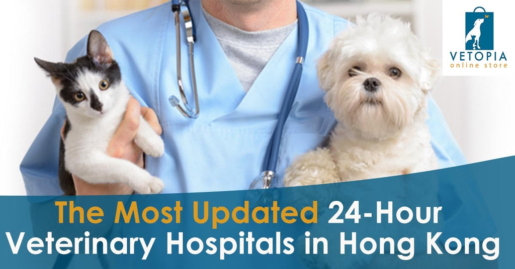 The Most Updated 24 Hour Veterinary Hospital in Hong Kong