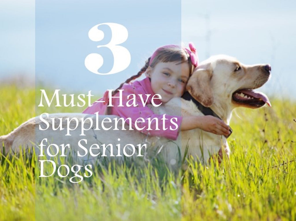 3 Must-Have Supplements for Senior Dogs