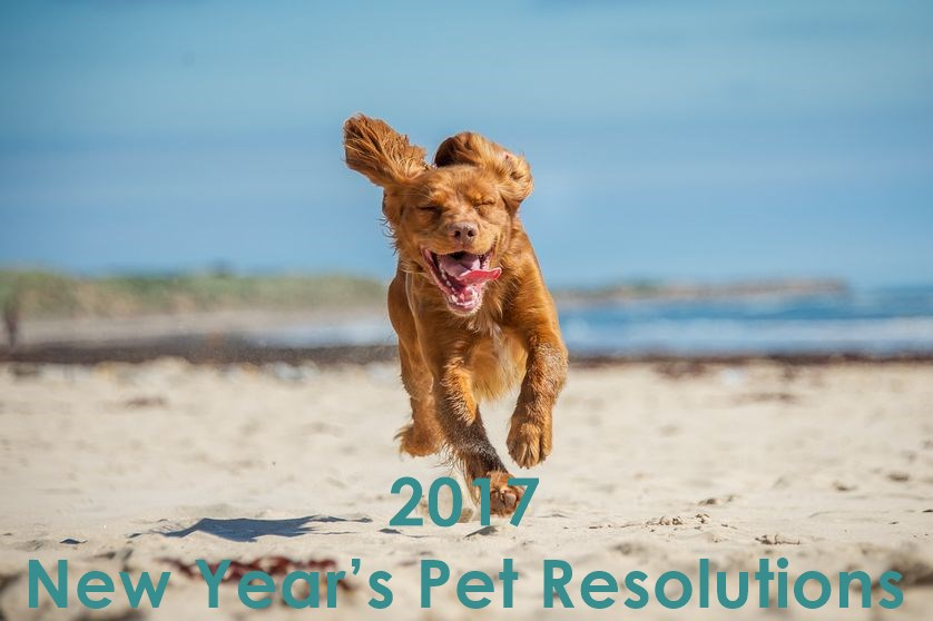 New Year's Pet Resolutions