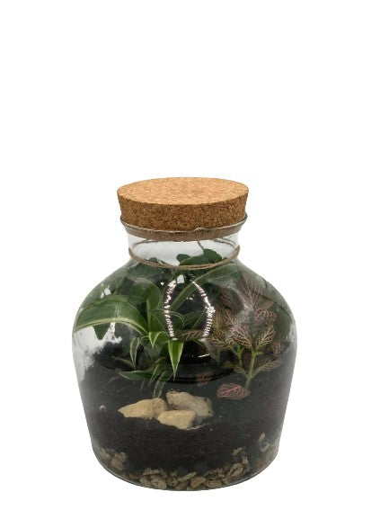 Cork top terrarium large