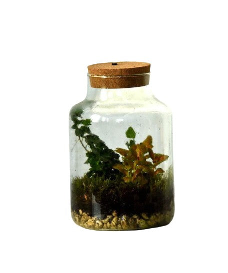 Cork Top Closed Terrarium With Internal Light