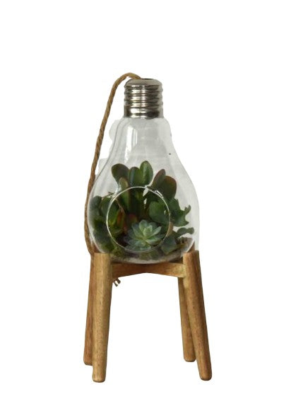 Hanging Lightbulb Terrarium
