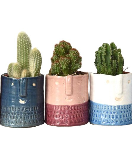 Cactus in Ceramic Face Planter